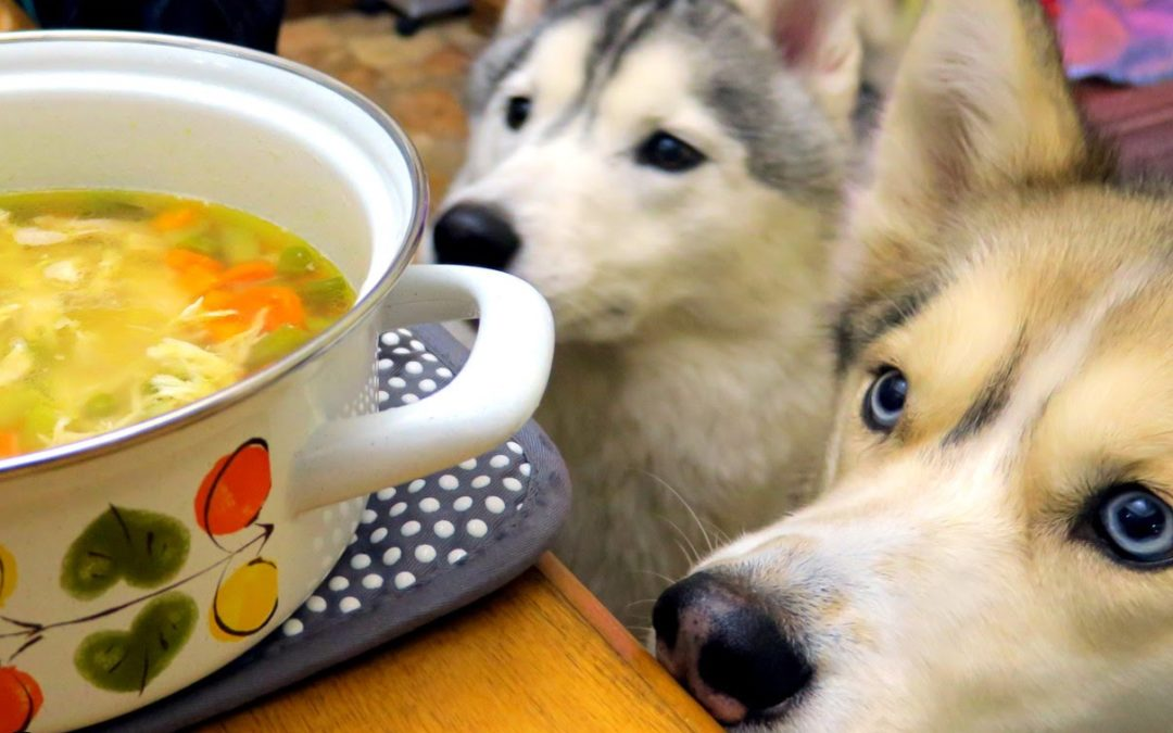 Chicken Soup for Pups